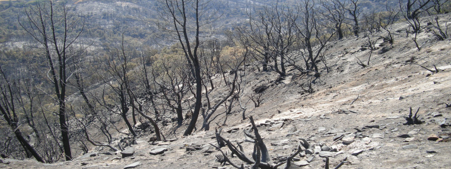Sand Fire Aftermath August 2014