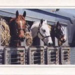 """Having an evacuation plan for your horses is fire """"Ready!"""""""